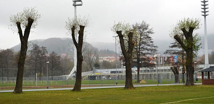 Baumpflege Jena